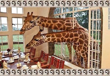 1+10、肯尼亞:長頸鹿莊園.jpg-2