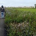 前往花海的田間小路