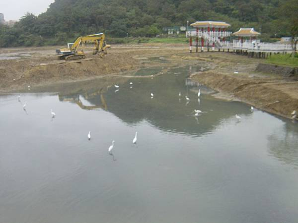 湖面上有白鷺鷥駐留