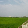 沿途青翠的稻田