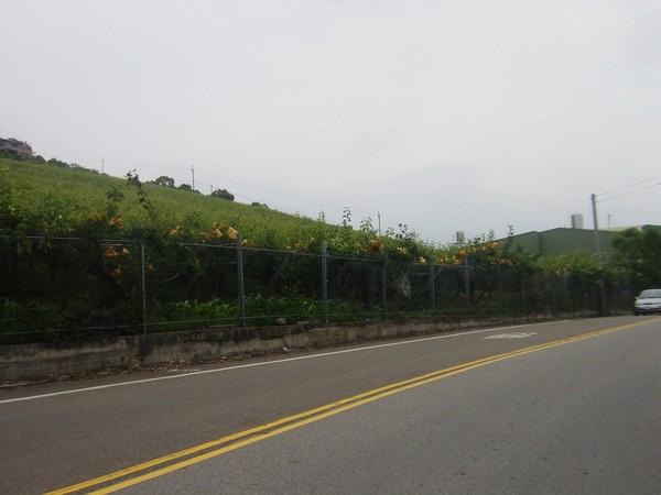 507高地,兩邊盡是果樹