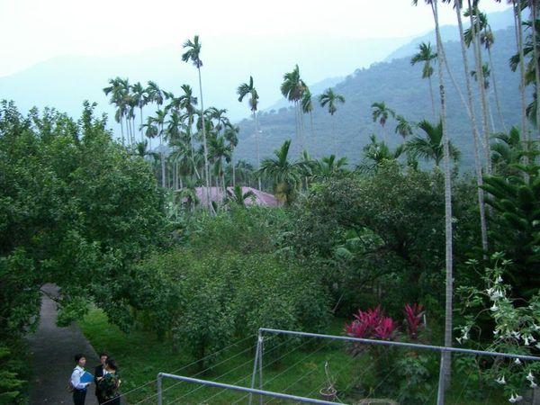 天主教教養院二樓後院景色