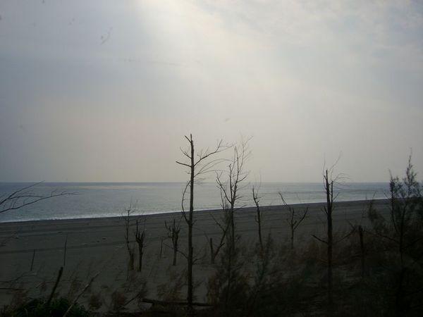 天空與海以及有些蒼涼的枯樹