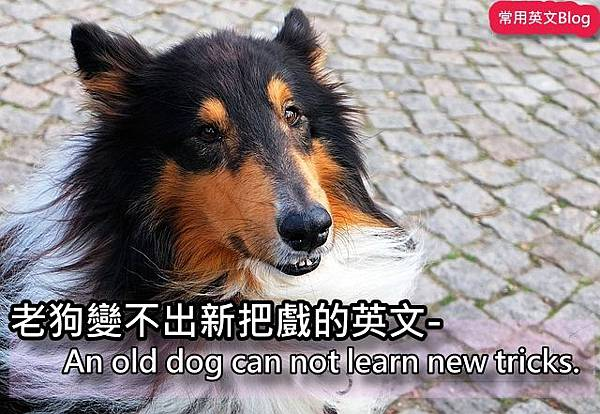 An old dog can not learn new tricks