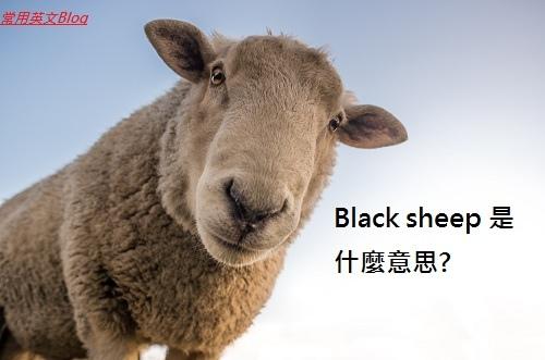 Black sheep 是什麼意思