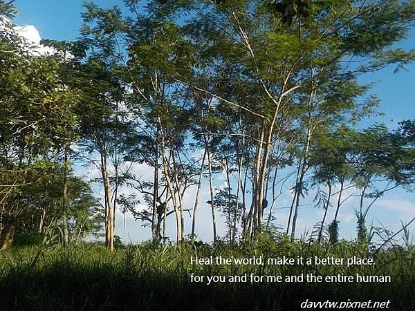 救亞馬遜雨林