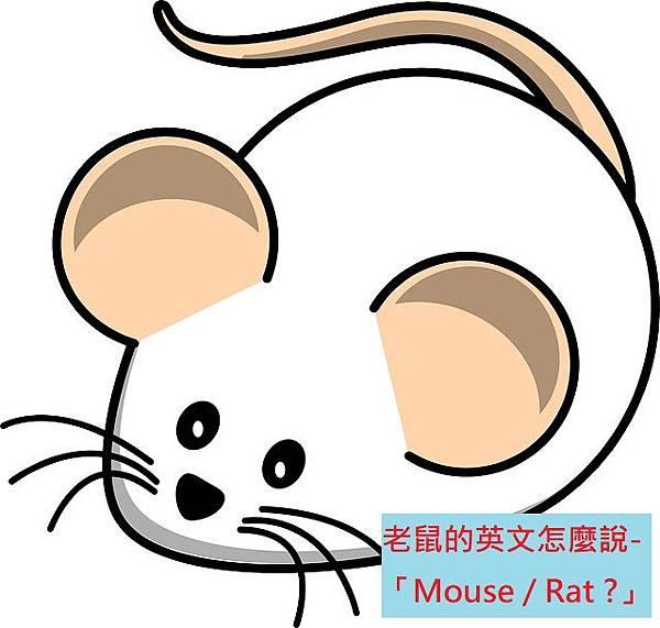 老鼠的英文怎麼說- 「Mouse / Rat ?」