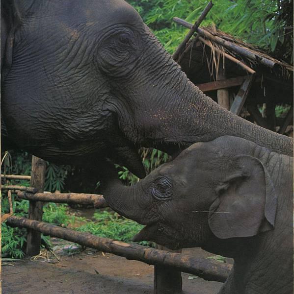 大象保育中心