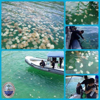 羅勇府沙美島海域附近出現大面積水母群