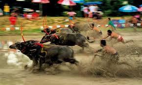 Pattaya賽牛節