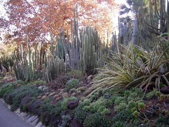 desert garden.1s.jpg
