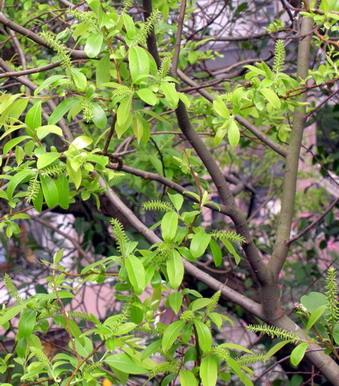 樹幹灰色.jpg