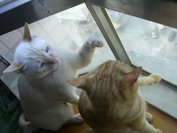 愛打架的兩兄弟