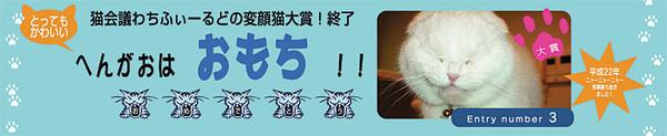 變顏貓第一名.jpg