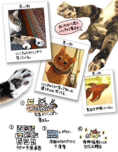 貓掌.jpg