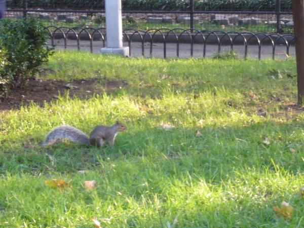 囂張又肥肥的松鼠