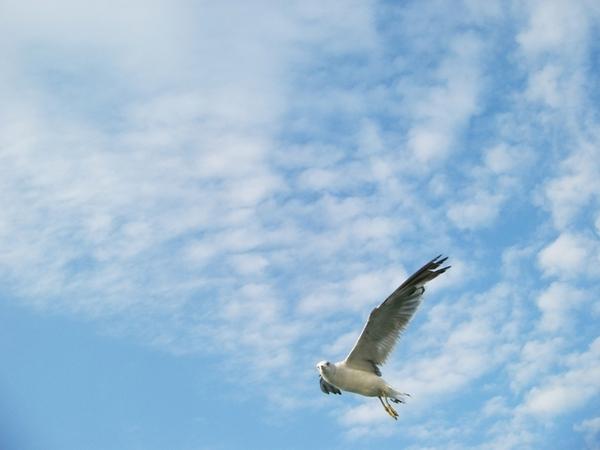 坐海鷗號至月尾島--餵海鷗