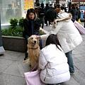 在新宿遇到的黃金獵犬