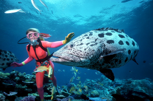 Great-Barrier-Reef-600x400.jpg