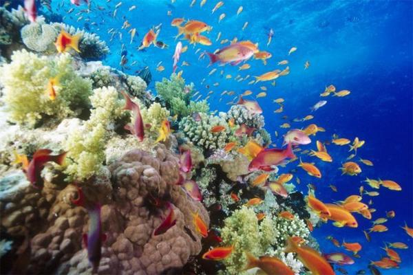 the-great-barrier-reef-of-australia12.jpg