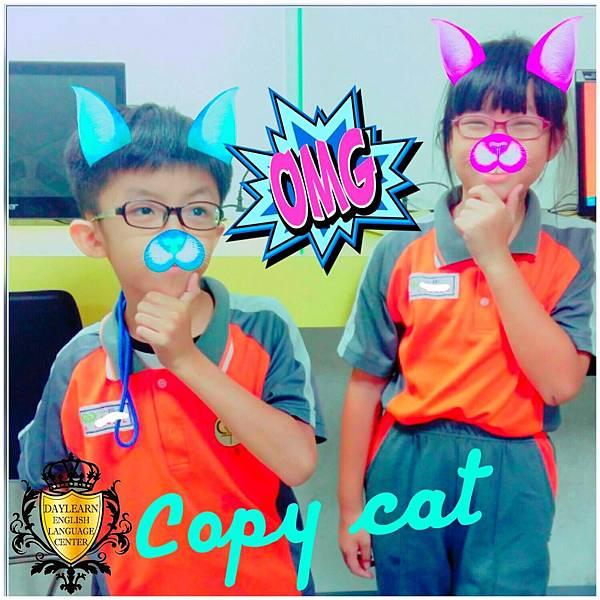20161031 copy cat.jpg