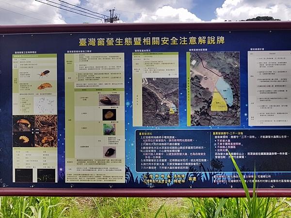 台灣窗螢生態解說.jpg