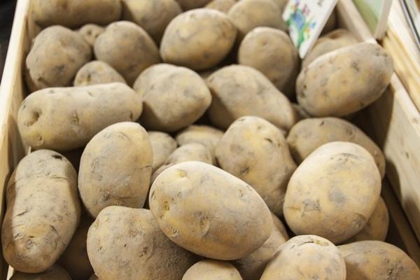馬鈴薯發芽有毒 蒸煮炒炸都沒用.jpg