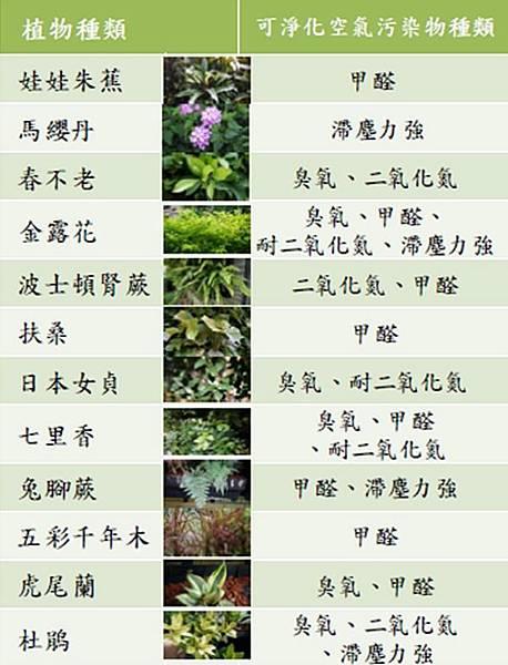 淨化空氣之建議植栽.jpg