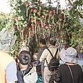 中臺灣農業博覽會暨國際盆栽展-彰化溪州公園10.jpg