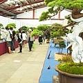 中臺灣農業博覽會暨國際盆栽展-彰化溪州公園19.jpg