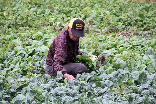 蔬果安心採購訣竅!與農藥共處的飲食之道.JPG