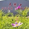 彰化市花海盛宴 田野餐桌饗宴(大港口婚宴會館旁登場).jpg