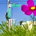 彰化市環河街132巷種植美麗的景觀作物.jpg