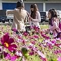 彰化市花海「幸福萌芽,無限花想」-彰化市彰草路5.jpg