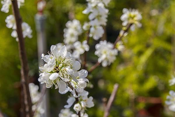 芬園花卉生產休憩園區3.jpg