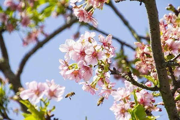 芬園花卉生產休憩園區2.jpg