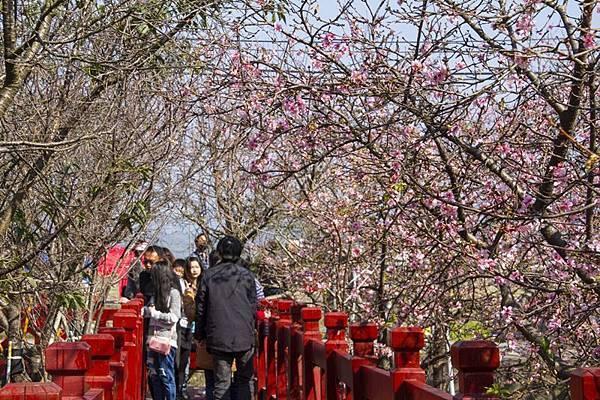 芬園花卉生產休憩園區10.jpg