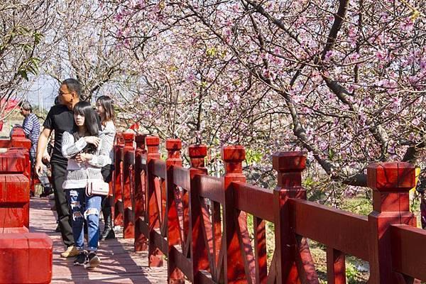 芬園花卉生產休憩園區9.jpg