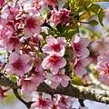 芬園花卉生產休憩園區14.jpg