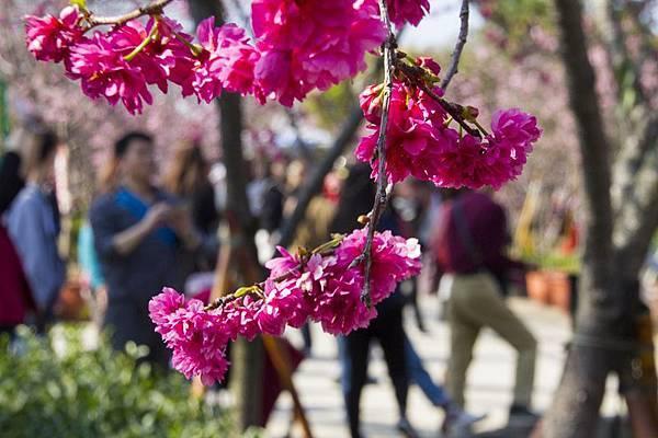 芬園花卉生產休憩園區25.jpg