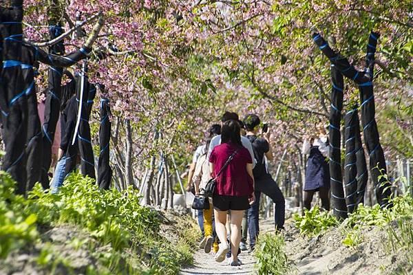 芬園花卉生產休憩園區24.jpg