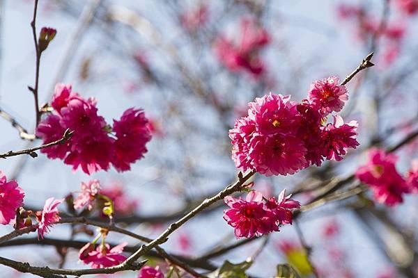 芬園花卉生產休憩園區26.jpg
