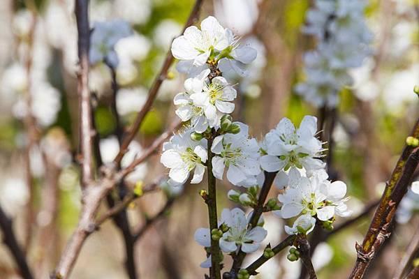 芬園花卉生產休憩園區28.jpg