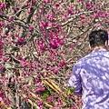 芬園花卉生產休憩園區27.jpg