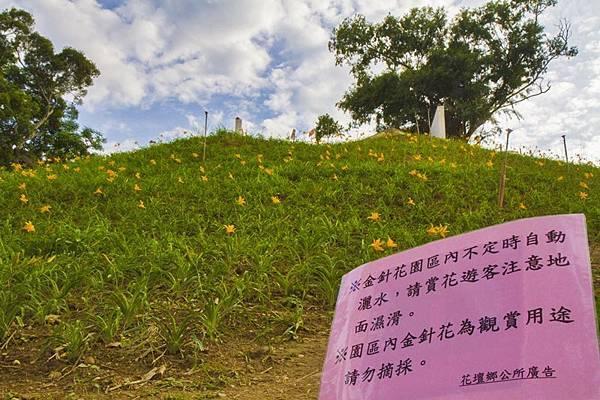 花壇虎山巖(虎山岩)旁金針花園秘境2.jpg
