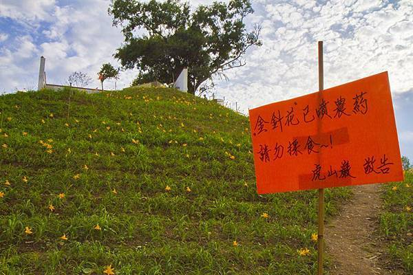 花壇虎山巖(虎山岩)旁金針花園秘境3.jpg