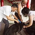 彰化縣寵物登記及狂犬病疫苗預防注射巡迴活動5.png