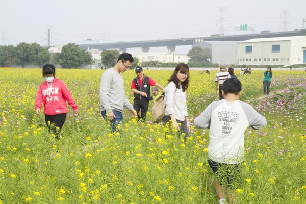 花漾和美 金豬吉祥賀新春2.png