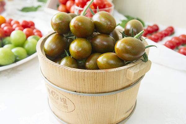 番茄方舟-琥番茄4.png