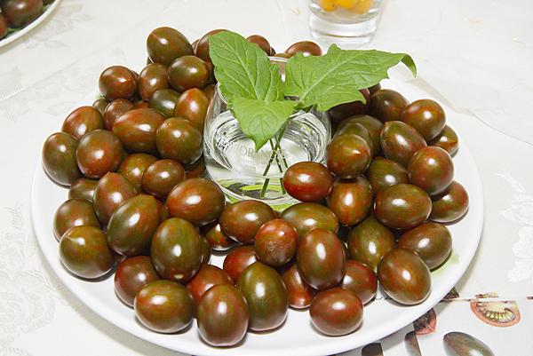 番茄方舟-琥番茄2.png